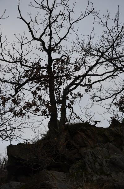 Baumwuchs Rotweinwanderweg © entdecker-greise.de