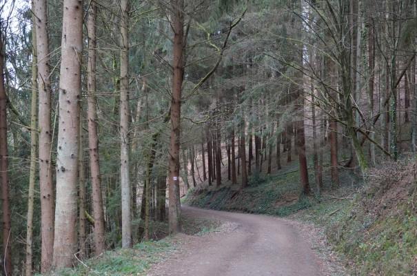 Waldabschnitt Rotweinwanderweg © entdecker-greise.de