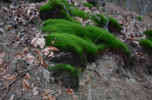 Abwechslung pur auf dem Rotweinwanderweg © entdecker-greise.de
