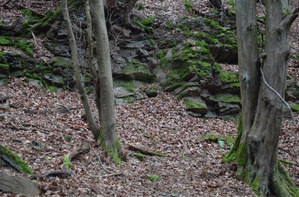 Waldimpressionen im Weingebiet Ahrtal © entdecker-greise.de