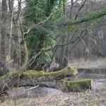 Wanderimpressionen Neanderlandsteig ©entdecker-greise.de