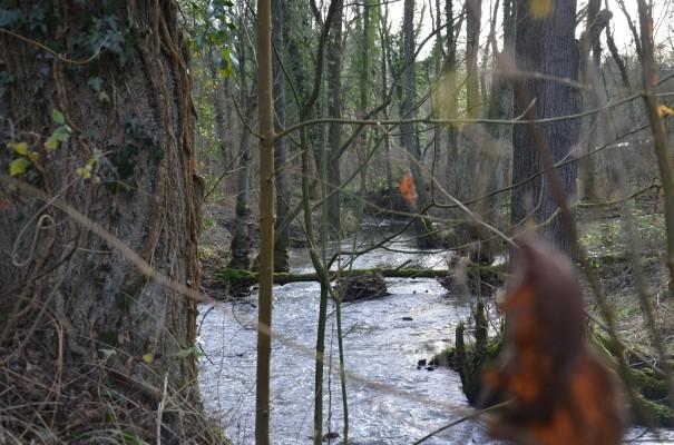 Wildromantisches Neandertal ©entdecker-greise.de