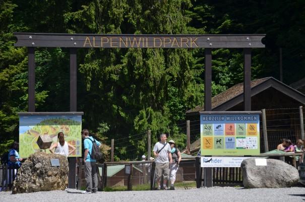 Der-Alpenwildpark-auf-dem-Pfänder-©entdecker-greise.de