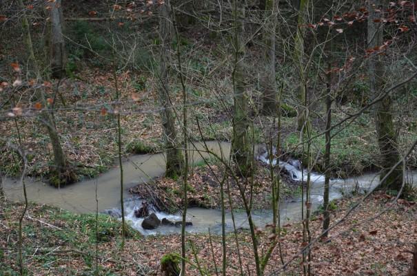 Der Niederschlag der letzten Tage und Wochen zeigt sich auch hier im Milchborntal sehr deutlich. ©entdecker-greise.de