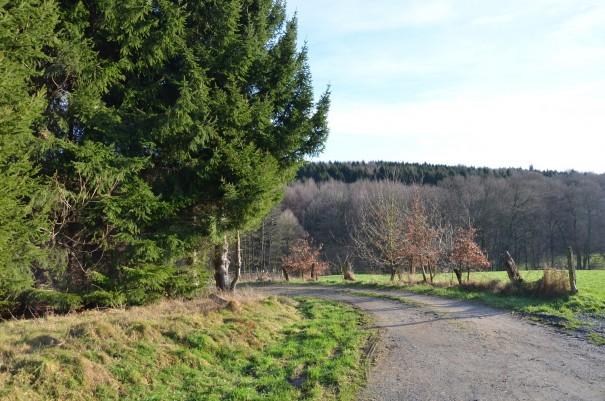 Felder, Wälder und Wiesen - Natur pur im Bergischen Land ©entdecker-greise.de