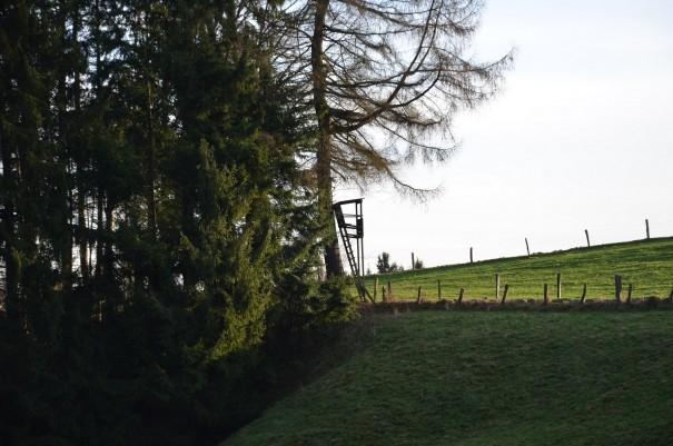 Hier kann man in den frühen Morgenstunden wunderbar Tiere beobachten ©entdecker-greise.de