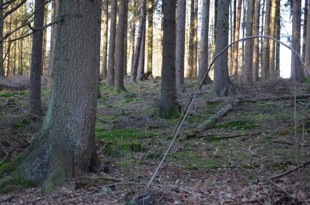 Meine Wanderung führt mich vorbei an stillen Wäldern ... ©entdecker-greise.de