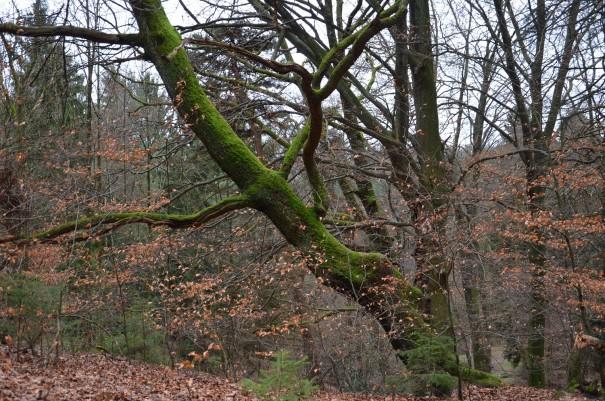 Wunderschöner Baumbestand, hier ist es einfach bei jedem Wetter herrlich! ©entdecker-greise.de