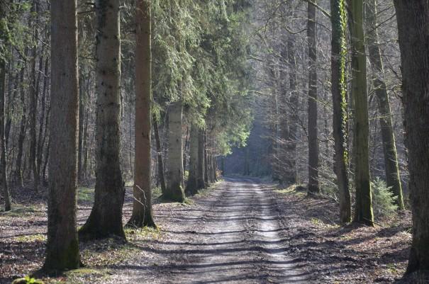 Abwechslungsreiche Streckenführung rund um Altenberg ©entdecker-greise.de