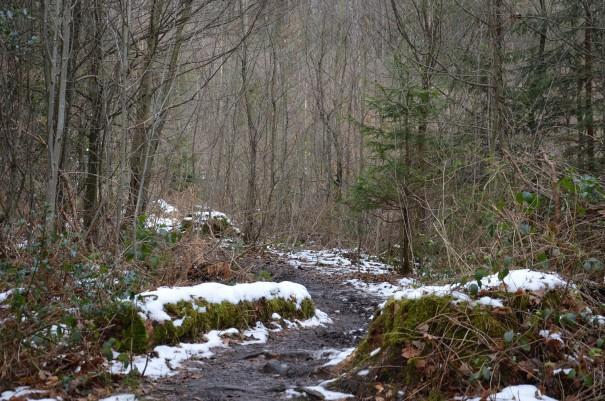 Der Winter hat die Landschaft noch im Griff, hier auf dem Bensberger Schlossweg ©entdecker-greise.de