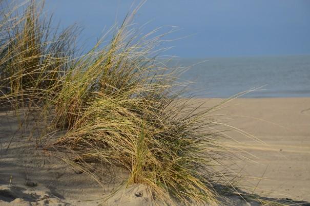 Endlich wieder Sonne, Strand und Meer und das Ende Januar in Cadzand ©entdecker-greise.de