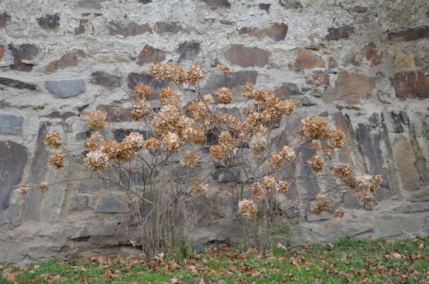 Impressionen vor der Stadtmauer Ahrwiler ©entdercker-greise.de