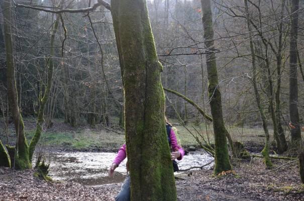 Mit ein wenig Glück kann man sogar eines der sehr seltenen und sehr scheuen kleinen Waldgespenster sehen ;-) ©entdecker-greise.de