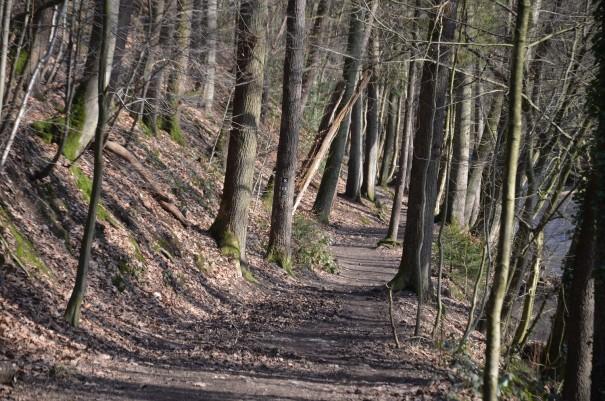 Wandern durch das Eifgenbachtal ©entdecker-greise.de