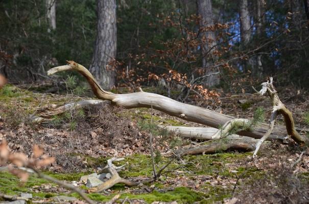 Wanderparadies Ahrsteig ©entdecker-greise.de