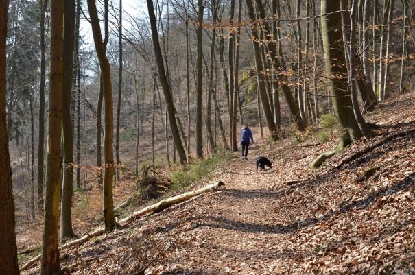 2. Etappe ... die ersten drei Kilometer geht es nur bergauf ... ©entdecker-greise.de
