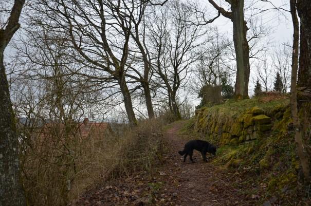 Bei diesem Wetter wirkt die Umgebung von Burg Frauenstein richtig mystisch ©entdecker-greise.de
