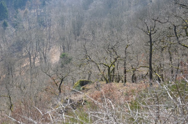 Wanderimpressionen auf dem Pfälzer Höhenweg ©entdecker-greise.de