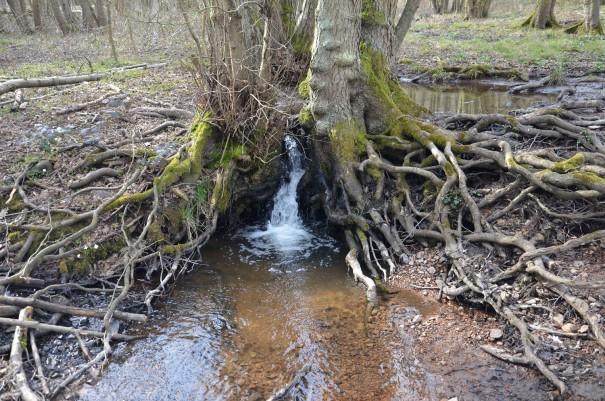 Was für ein witziger kleiner Wasserfall - die Natur findet eben immer einen Weg ©entdecker-greise.de