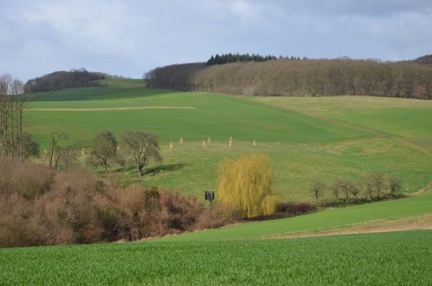 Die einzelne Trauerweide wirkt irgendwie fremd in dieser Landschaft ©entdecker-greise.de