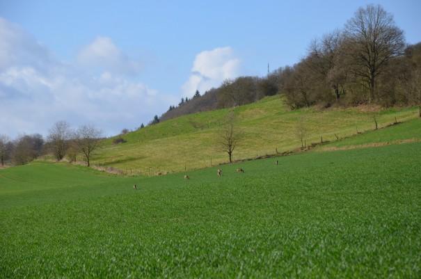 Ein stetiges Auf und Ab auf dem Pfälzer Höhenweg  ©entdecker-greise.de
