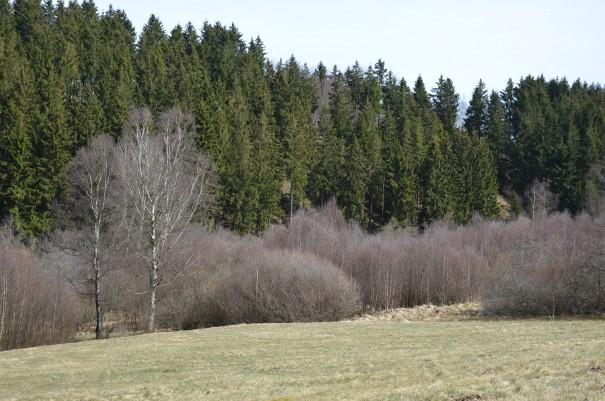 Ständig wechselnde Aussichten auf die wunderschöne Eifler Höhenlandschaft. ©entdecker-greise.de