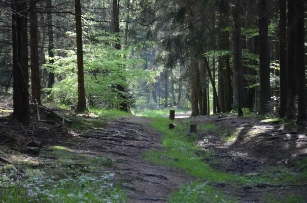 #TTwandern auf dem Westerwald Steig - die kühle Luft auf der Haut, das Klopfen des Spechtes und ein Vogelkonzert im Ohr und Glückseligkeit im Herzen ©entdecker-greise.de