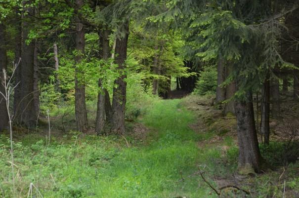 Was für eine wundervolle Streckenführung hier auf dem Westerwald Steig #TTwandern ©entdecker-greise.de