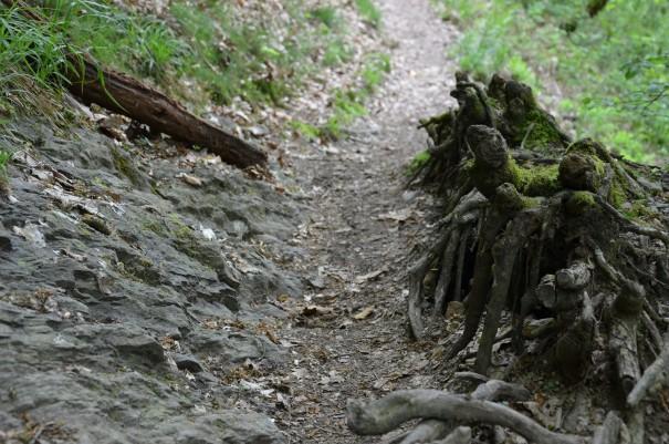 Auf dieser Etappe ist Trittsicherheit gefragt #TTwandern Westerwald Steig ©entdecker-greise.de