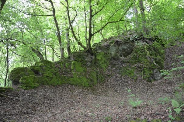 Die Wanderung hat gerade erst begonnen und doch bin ich schon wieder mitten drin in all der Schönheit des Westerwaldes #TTwandern auf dem Westerwald Steig ©entdecker-greise.de