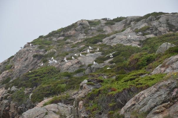 Norwegens Südkap ... wildromantisch ... ©entdecker-greise.de