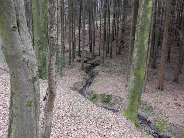 Die Streifzüge führen über Hähen und Täler, vorbei an kleinen Bachläufen ... ©entdecker-greise.de