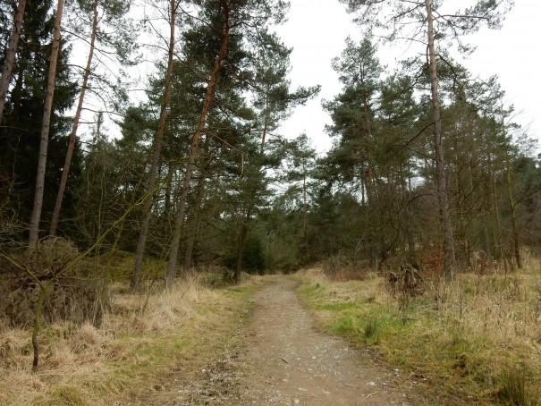 Kiefernwälder wechseln sich mit Buchenwäldern ab. Der Bergbauweg ist herrlich abwechslungsreich. ©entdecker-greise.de