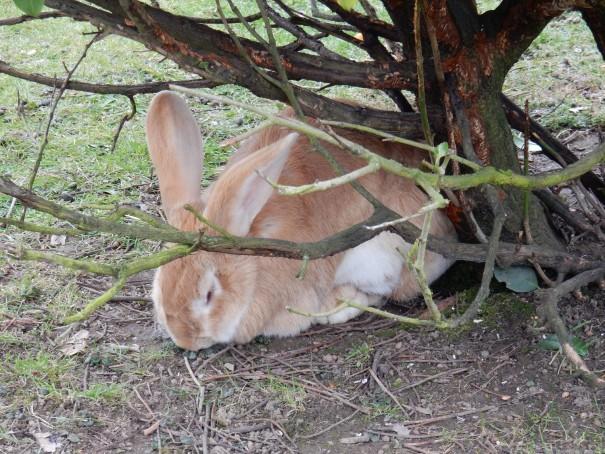 Wildlife auf den Bergischen Streifzügen. Manchmal findet man sogar den Osterhasen ;-) ©entdecker-greise.de