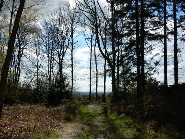 Der Steinhauerpfad ist unglaublich vielseitig und wunderschön. ©entdecker-greise.de