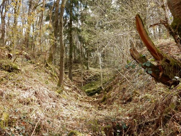 Der Wald ist teilweise so urtümlich und so wunderbar ... ©entdecker-greise.de