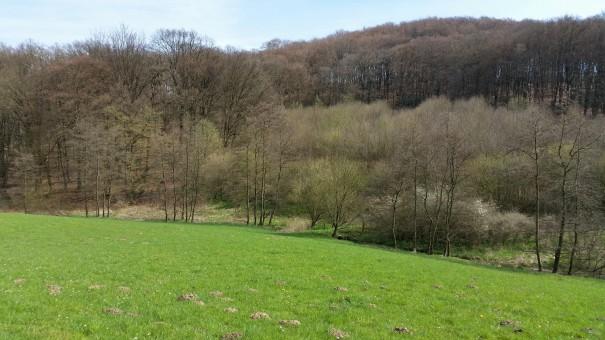 Entschleunigung und Naturerlebnisse im Bergischen Land. ©entdecker-greise.de