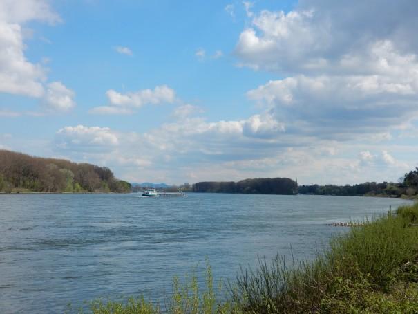 Erkennt man dort hinten vielleicht schon das Siebengebirge ... Radtour auf dem Rhein Radweg ... ©entdecker-greise.de