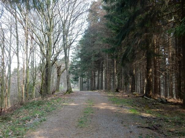Forstwege wechseln sich ab mit versteckten Pfaden in Waldgebieten und Wiesenwegen über die Höhen des Bergischen Landes. ©entdecker-greise.de