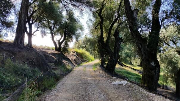 Bei soviel landschaftlicher Schönheit vergisst man doch glatt jede Anstrengung! #Corfelios ©entdecker-greise.de