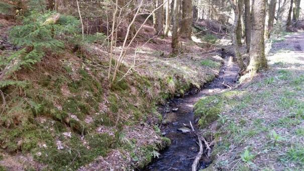 Ein Teil des Klangpfades führt an diesem kleinen Bach entlang. ©entdecker-greise.de