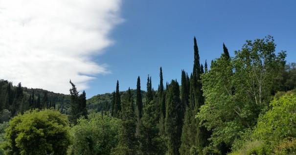 Unzählige Zypressen und Oivenbäume bestimmen das Bild von Korfu. #Corfelios ©entdecker-greise.de