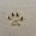 Urlaub mit Hund ©www.entdecker-greise.de