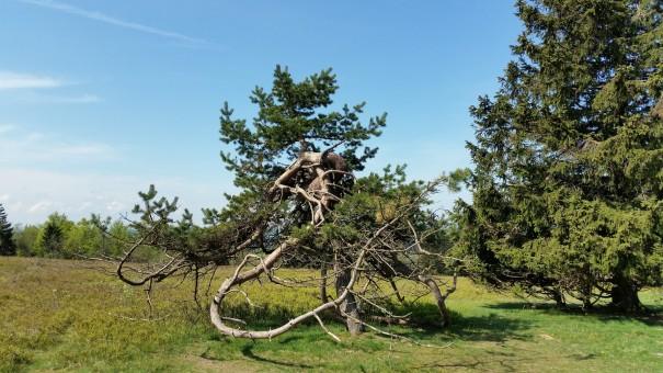 Naturskulpturen im Schmallenberger Sauerland. ©www.entdecker-greise.de