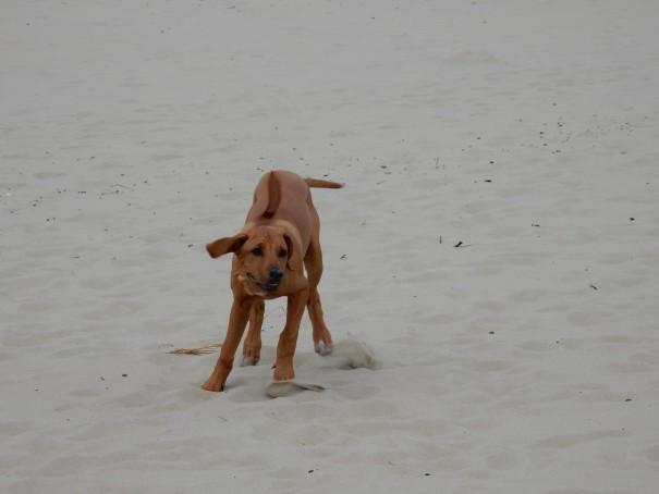 Texel ... ein großes Paradies für kleine Hunde ;-) ©www.entdecker-greise.de