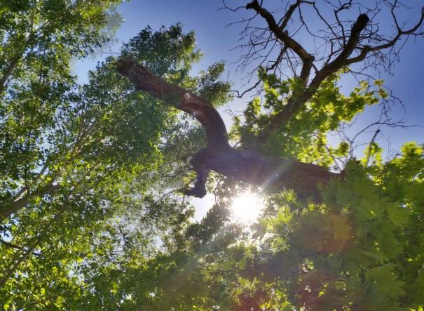 Herrlich hier unter diesem riesigen alten Baum Rast zu machen ©www.entdecker-greise.de #corfelios
