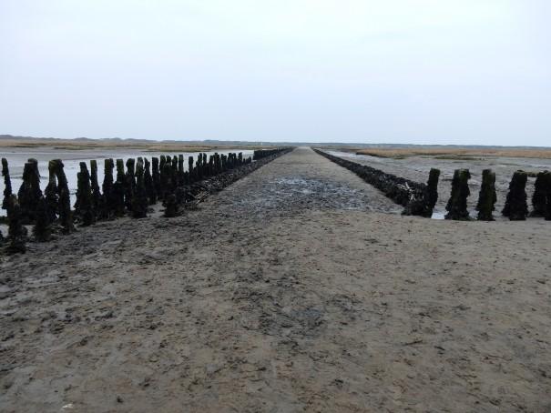 Im Weltnaturerbe des Niedersächsischen Nationalpark Wattenmeer gibt es viel zu entdecken - Worauf wartest Du ... ©www.entdecker-greise.de