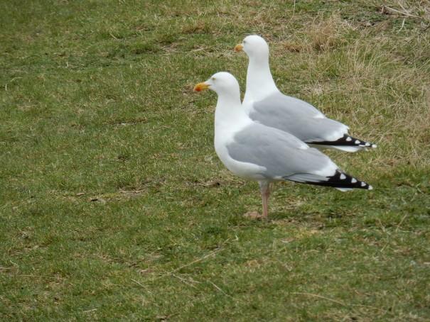 Im Weltnaturerbe des Niedersächsischen Nationalpark Wattenmehr bekommt man viele verschiedene Tierarten zu Gesicht ©www.entdecker-greise.de