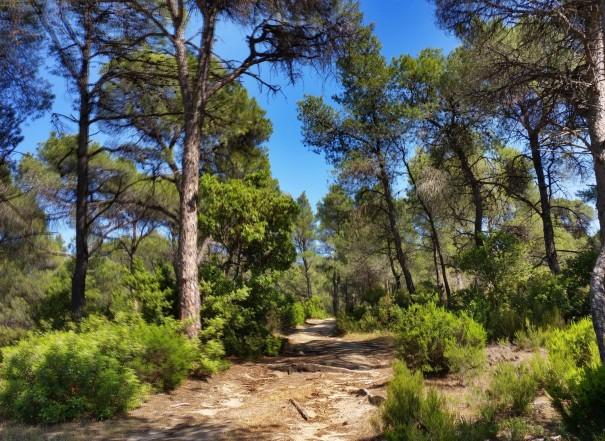 Wanderimpressionen von Chalkidiki ©www.entdecker-greise.de #corfelios