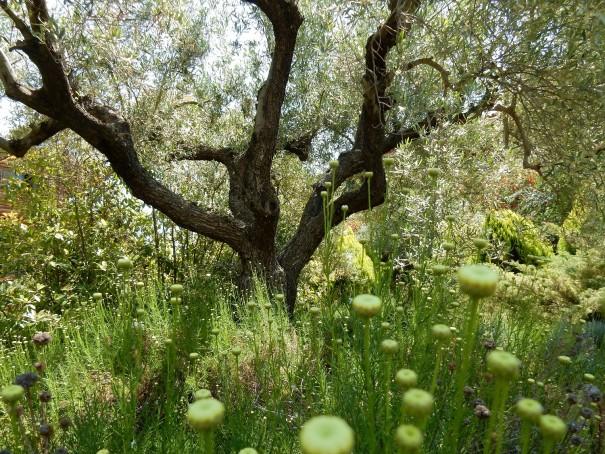Der verwunschene Garten rund um das Geisterhotel. ©www.entdecker-greise.de #corfelios